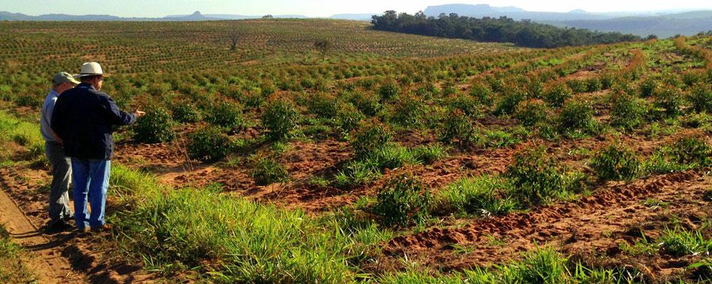 projeto-imagem-agrobusiness